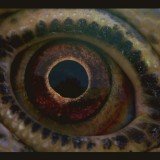 Voyage of Time (1x)